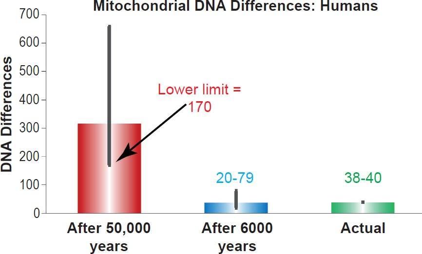 Mitochondrial DNA Differences: Humans