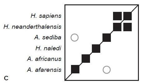 Three-dimension MDS Results