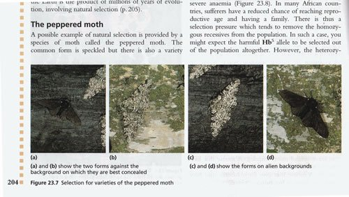 Fradulent photos of peppered moths still appear in biology textbooks, allegedly an example of evolution.