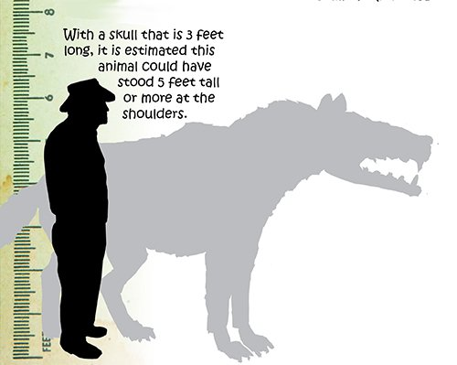 Andrewsarchus | Kids Answers