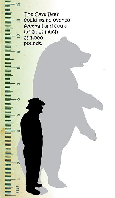 Cave Bear Size