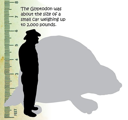 Glyptodon Size