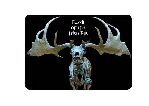 Irish Elk Fossil