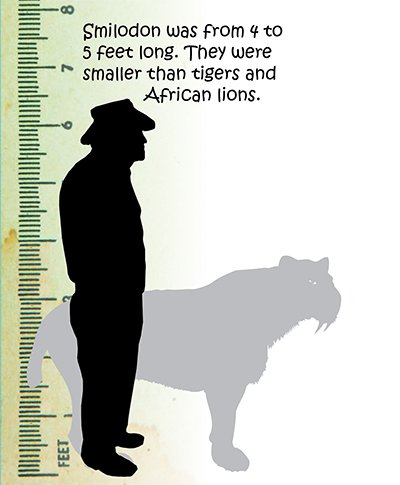 Saber Tooth Cat Size