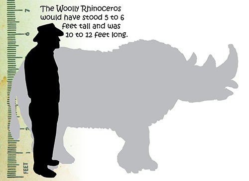Woolly Rhinoceros Size