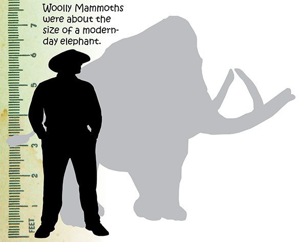 Wooly Mammoth Size