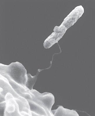 Amoeba Entraps Bacterium