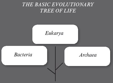 Evolutionary Tree of Life