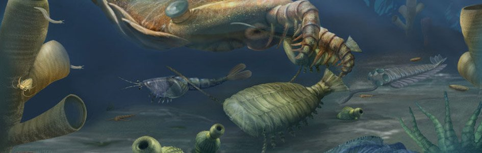 Cambrian Explosion Illustration