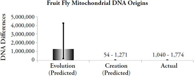 Fruit Fly Mitochondrial DNA Origins