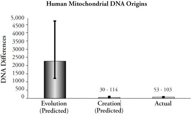Human Mitochondrial DNA Origins