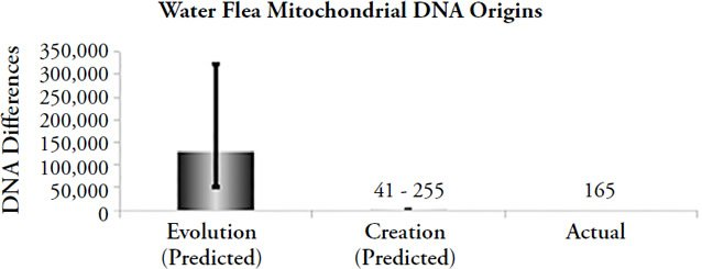 Water Flea Mitochondrial DNA Origins
