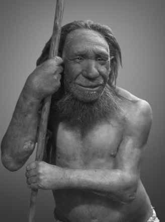 Neanderthals at the same museum post-2010