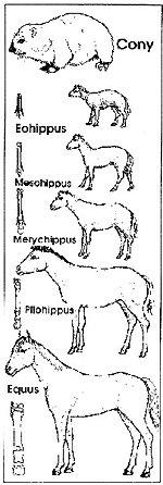 Horse Series