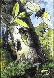 Cicada drawing