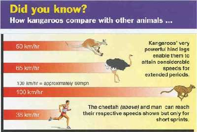 Comparison of speeds of kangaroos, other animals and humans