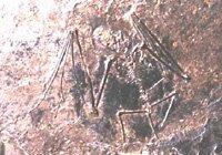 Fossil of Palæochiropteryx tupaiodon