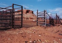 cattle pen