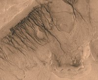 Gullies on the Newton crater