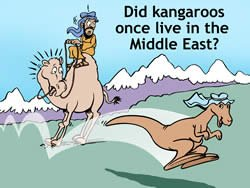 Kangaroo in Middle East