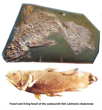 Example of Living Fossil