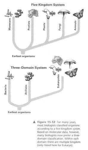 Five-Kingdom System