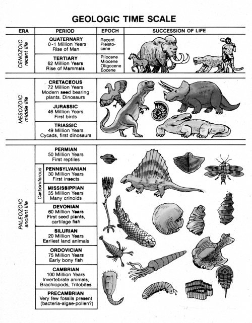 Fossil dating information chart answer key