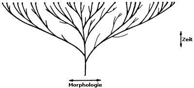 Morphologie-Zeit
