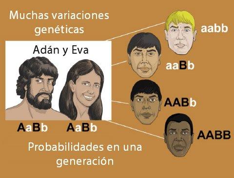 Muchas variaciones genéticas