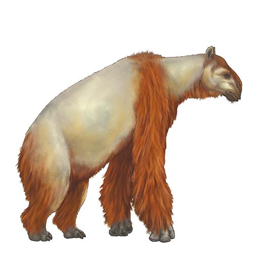 Anisodon