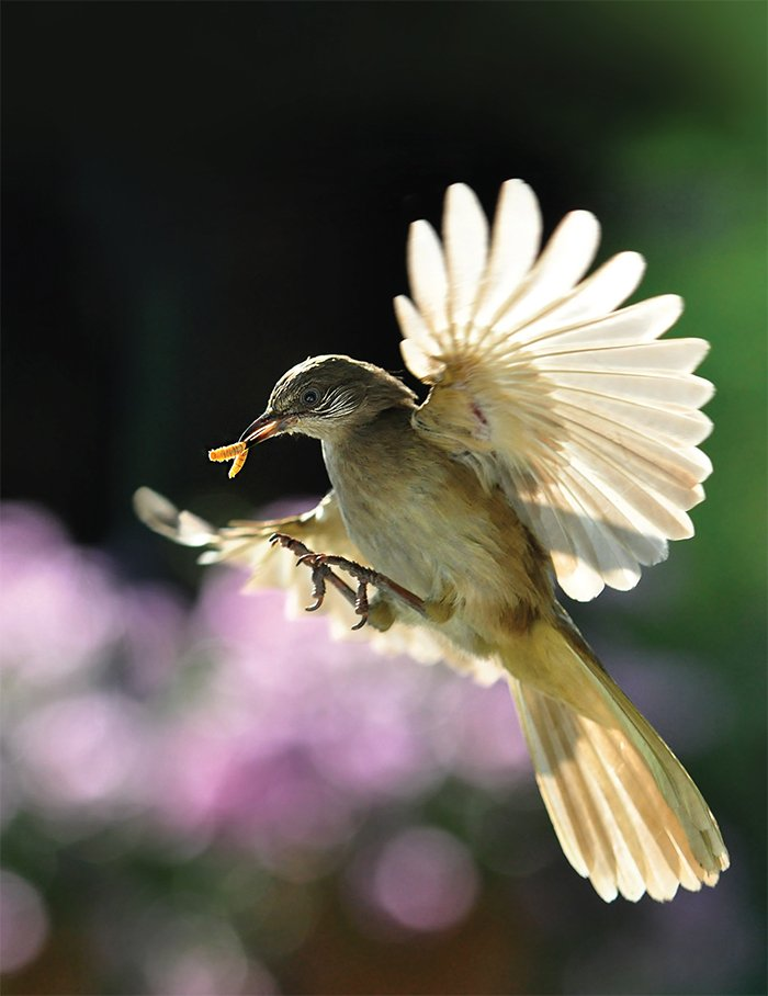 Darting Bird