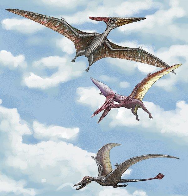 Air Reptiles