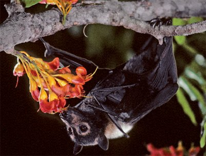 Bats are cool!