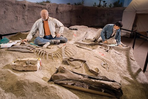Fossil Dig Site Exhibit