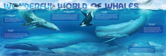 Wonderful World of Whales