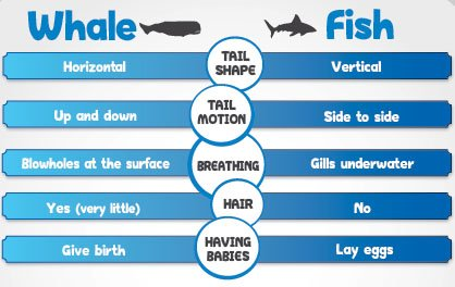 Whale vs. Fish