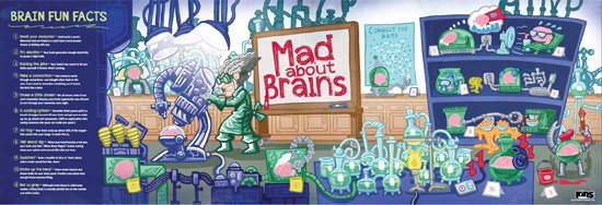 Mad About Brains