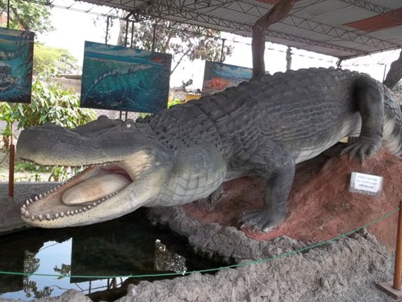Museum Model of Crocodile
