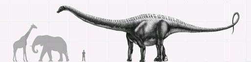 Sauropod Size Comparison