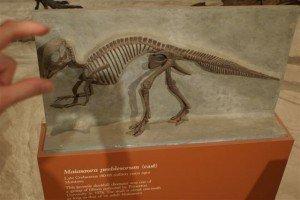 Duckbill Dinosaur