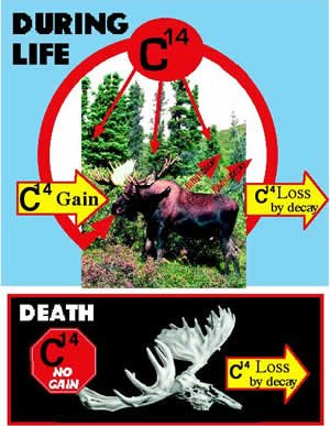 C-14 during life and after death