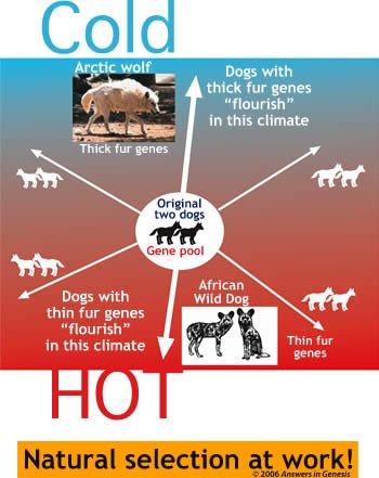 [Image: cold-hot-dog-fur.jpg]