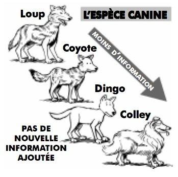 L'espèce canine: Loup, Coyote, Dingo, Colley: Moins d'information: Pas de nouvelle information ajoutée