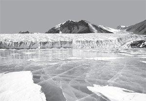 Arctic Lake Ice