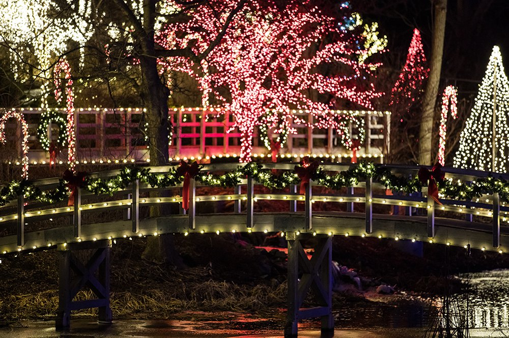 Creation Museum Christmas Lights in Gardens