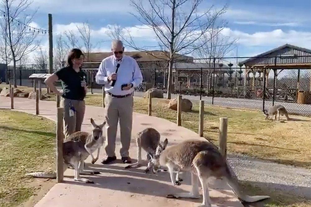 Ken Ham Facebook Live with Kangaroos