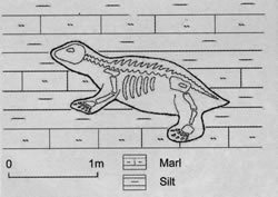 Position of the pareiasaur in the sediments