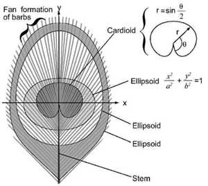 Mathematical Curves in the Eye Pattern