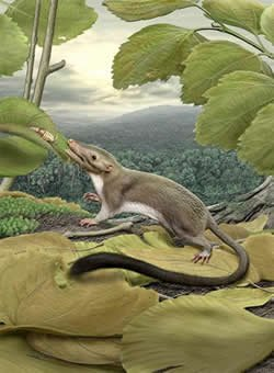 Supposed ancestor of placental mammals