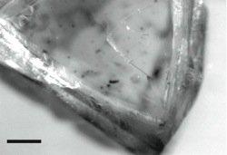 Radiohalos In Macle Diamond
